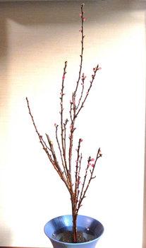 2014-02-01syouka.JPG