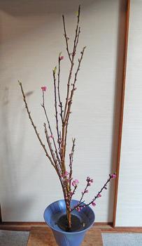 2014-02-22syouka.JPG