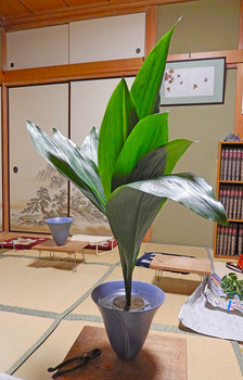 2014-10-25haran.jpg