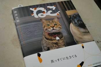 neko-book.jpg