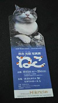neko-ticket.jpg